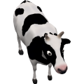 Cow_cls