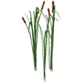Cattails_cls