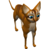 Abyssinian-cat