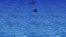 Shark Swim Around an Object