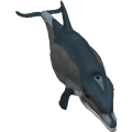 Dolphin_cls