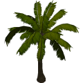 Coconutpalm_cls